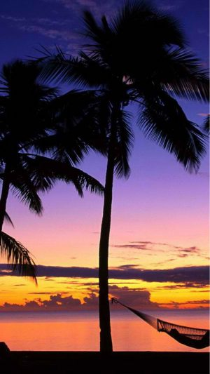Beach Palmtrees iPhone 8 wallpaper
