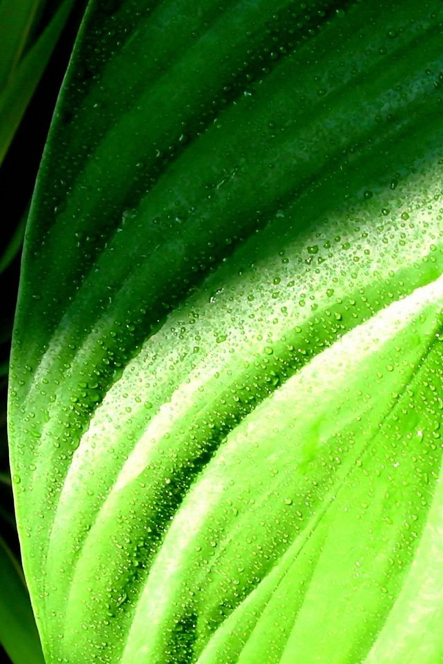 Green Leaves With Rain Drops Iphone 8 Wallpaper