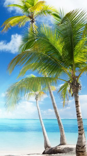 Caribbean sea and coconut palms iPhone 8 wallpaper