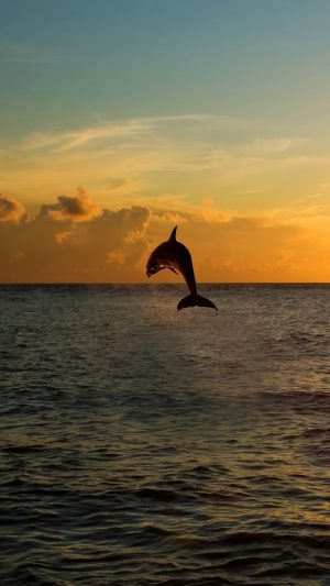 Dolphin jumping out of the sea in florida iPhone 8 wallpaper