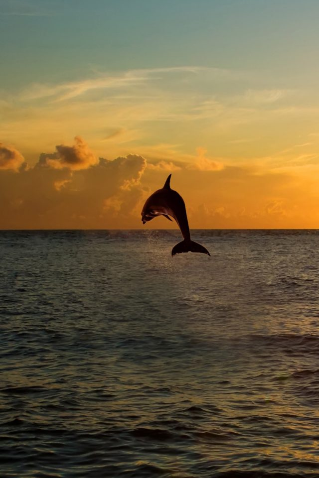 Dolphin jumping out of the sea in florida iPhone wallpaper