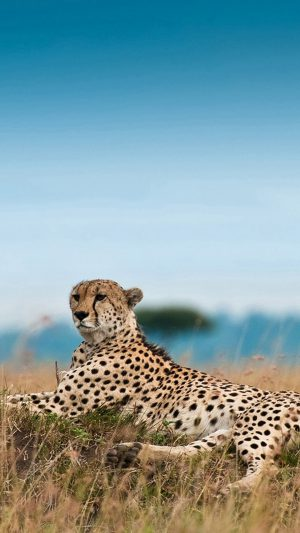 South Africa Leopard iPhone 8 wallpaper