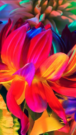 Apple MacBook Flower Rainbow Color Illustration Art Nature iPhone 8 wallpaper