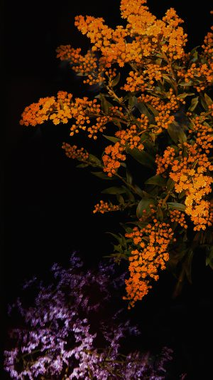 Apple Orange Flower Dark Ios9 Iphone6s iPhone 8 wallpaper