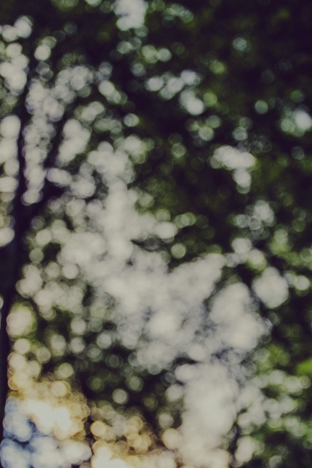 Bokeh Forest Tree Sky Nature iPhone wallpaper