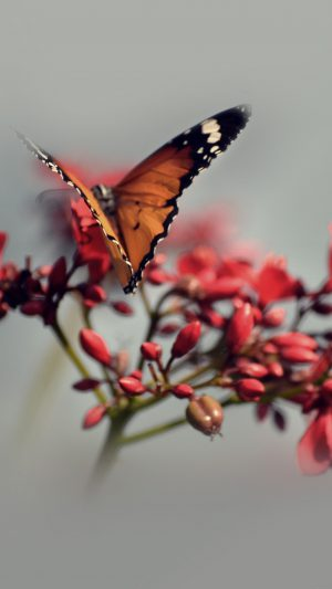 Nature Butterfly Flower Red iPhone 8 wallpaper