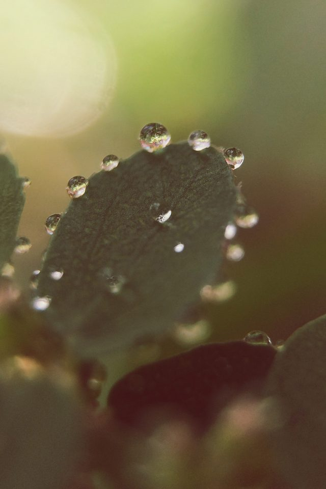 Nature Morning Dew Leaf Flower Rain iPhone wallpaper