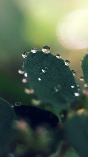 Nature Morning Dew Leaf Flower Rain Green iPhone 8 wallpaper