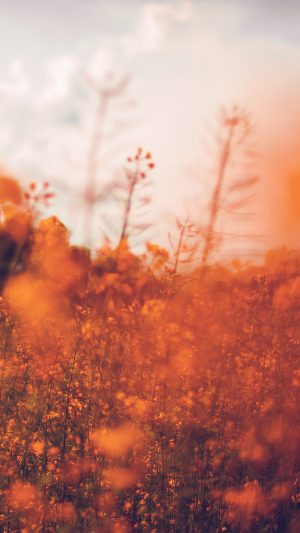 Nature Orange Flower Bokeh Spring Happy iPhone 8 wallpaper