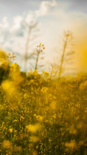 Nature Yellow Flower Bokeh Spring Happy iPhone 8 wallpaper