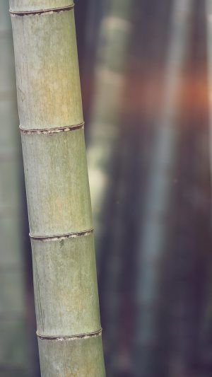 Bamboo Nature Tree Blue iPhone 8 wallpaper