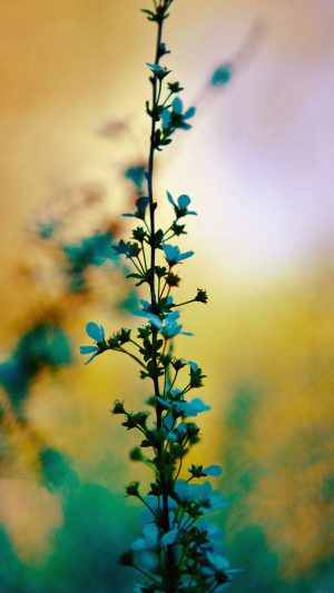 Blue Flower Sunny Bright Day Bokeh Nature iPhone 8 wallpaper