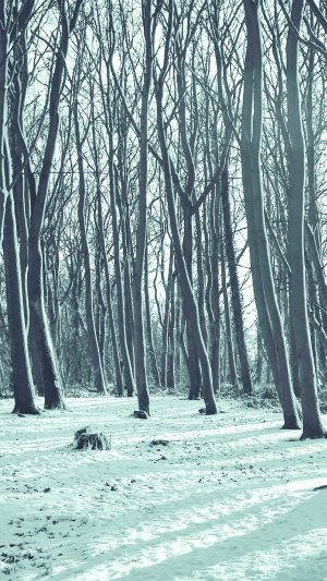 Cold Winter Forest Snow Nature Mountain Blue iPhone 8 wallpaper