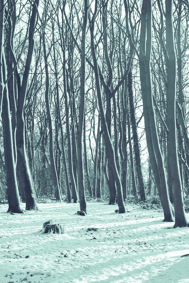 Cold Winter Forest Snow Nature Mountain Blue iPhone wallpaper
