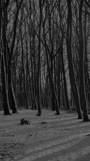 Cold Winter Forest Snow Nature Mountain Dark Bw iPhone 8 wallpaper