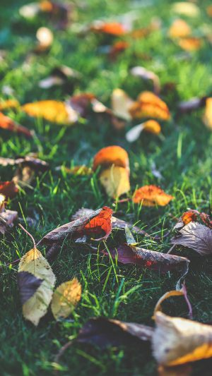 Fall Leaf Nature Green Backyard iPhone 8 wallpaper