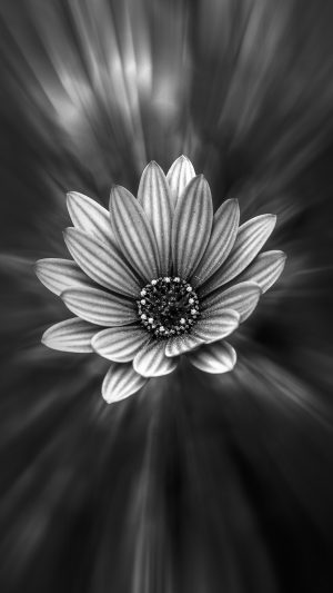 Flower Dark Black Nature Bw iPhone 8 wallpaper