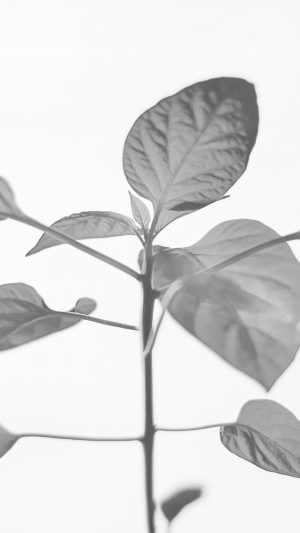 Flower Leaf Simple Minimal Nature Bw iPhone 8 wallpaper