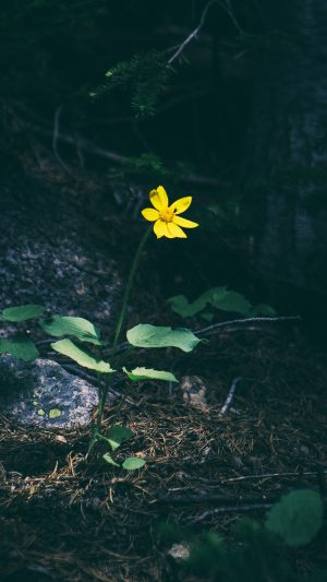 Flower Yellow Forest Wood Lonely Dark Nature iPhone 8 wallpaper