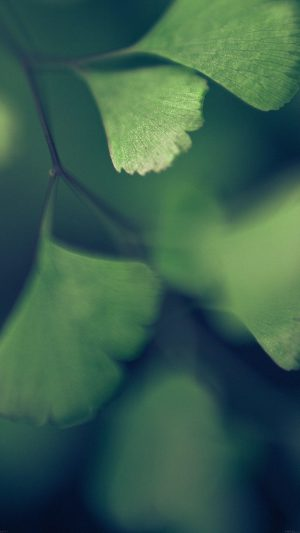 Good Luck Blue Clovers Leaf Nature iPhone 8 wallpaper