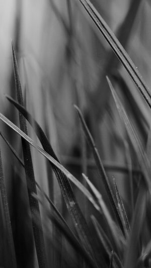 Grass Dark Bw World Garden Leaf Nature iPhone 8 wallpaper