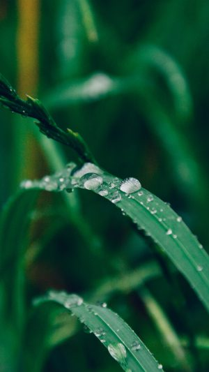 Grass Drop Water Rain Nature Forest iPhone 8 wallpaper