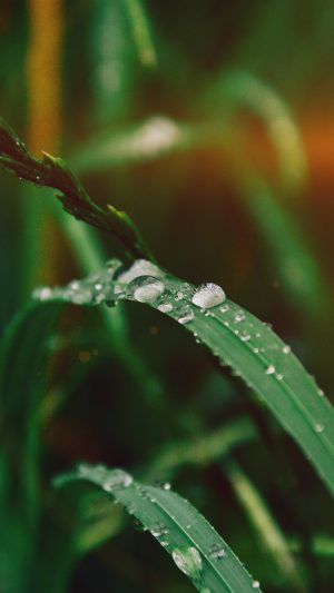 Grass Drop Water Rain Nature Forest Flare iPhone 8 wallpaper