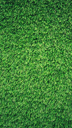 Grass Green Pattern Nature iPhone 8 wallpaper