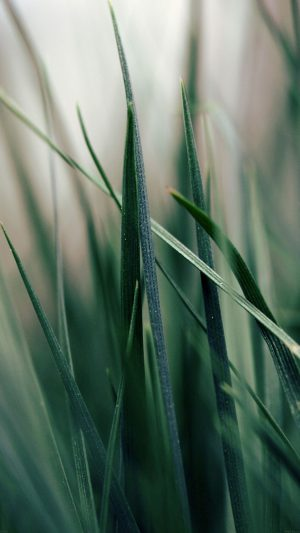 Grass World Garden Leaf Nature iPhone 8 wallpaper