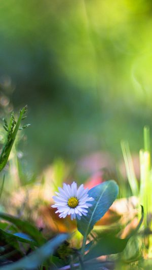 Green Lawn Flower Bokeh Nature iPhone 8 wallpaper