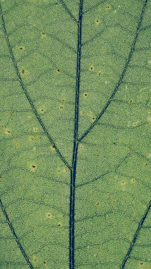 Green Leaf Texture Nature Pattern iPhone 8 wallpaper