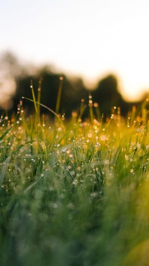 Lawn Green Nature Sunset Light Bokeh Sprin iPhone 8 wallpaper