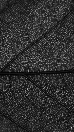 Leaf Dark Bw Nature Texture Pattern iPhone 8 wallpaper