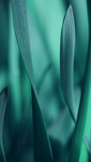 Leaf Grass Blue Bokeh Nature iPhone 8 wallpaper