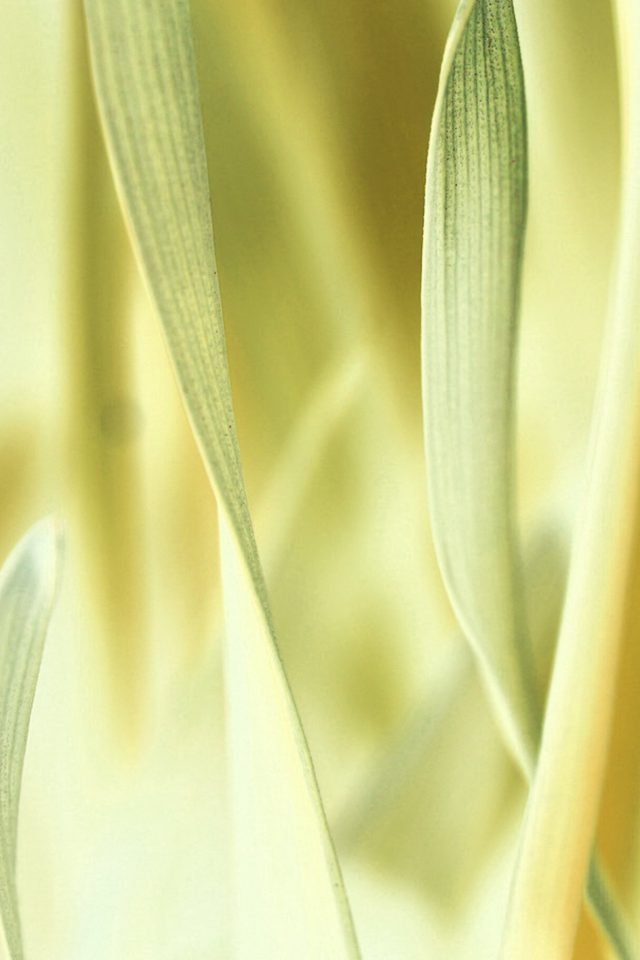Leaf Grass White Bokeh Nature iPhone wallpaper