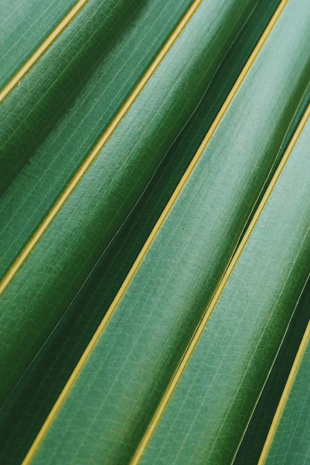 Leaf Green Line Nature Pattern iPhone wallpaper