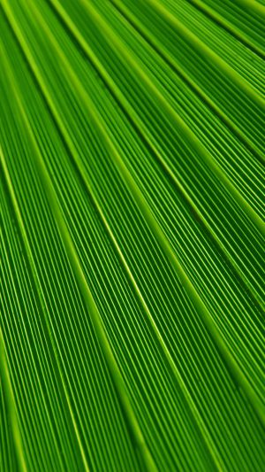 Leaf Green Surface Texture Nature Pattern iPhone 8 wallpaper