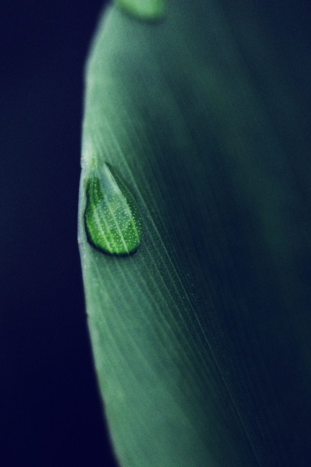Leaf Raindrop Blue Nature Iphone 8 Wallpaper