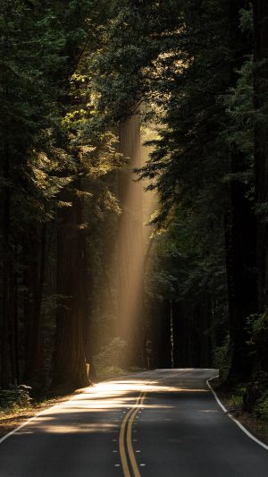 Sunrays Road Wood Forest Way Nature iPhone 8 wallpaper