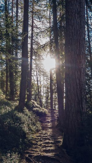 Light Wood Sun Forest Mountain Nature iPhone 8 wallpaper