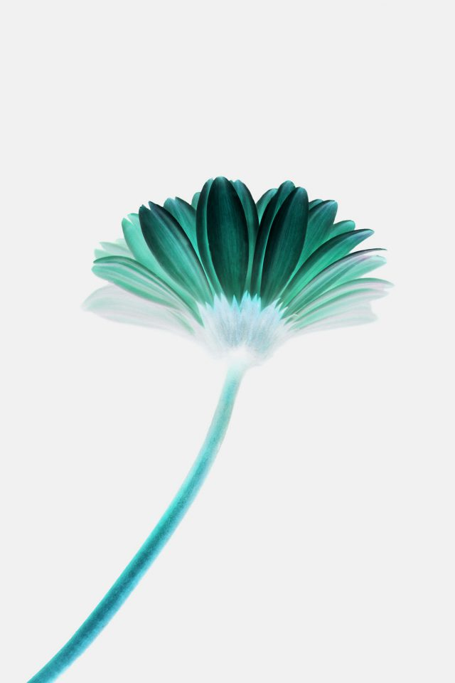 Lonely Flower White Green Simple Minimal Nature Iphone 8