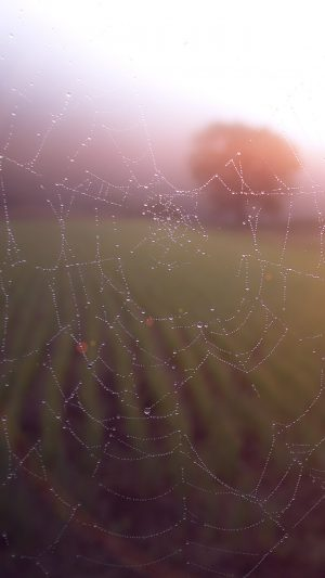 Morning Dew Spider Web Rain Water Nature Flare iPhone 8 wallpaper