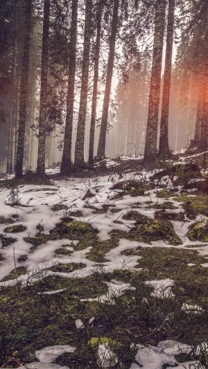 Mountain Snow Woods Nature Flare iPhone 8 wallpaper