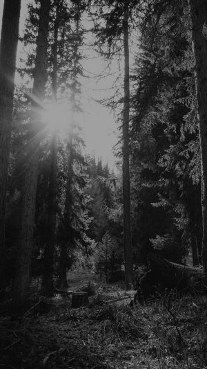 Mountain Sunlight Bw Marco Jorger Nature iPhone 8 wallpaper