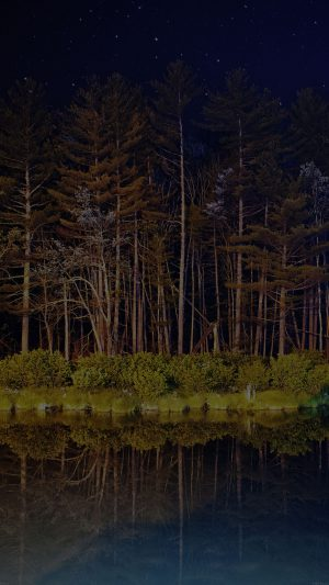 Night Dark Wood With Lake Nature iPhone 8 wallpaper