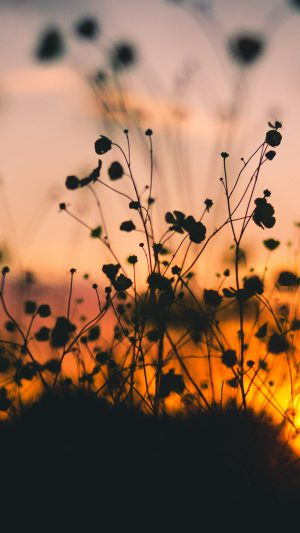 Night Nature Flower Sunset Dark Shadow iPhone 8 wallpaper