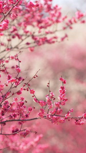 Pink Blossom Nature Flower Sprin iPhone 8 wallpaper