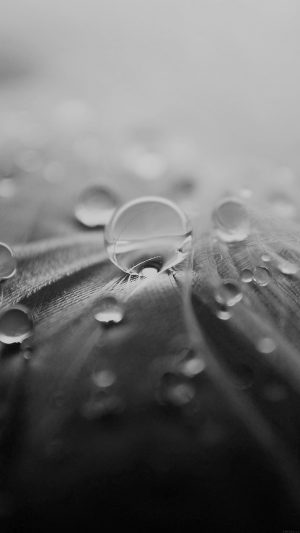 Raindrops Nature Leaf Art Bw Dark iPhone 8 wallpaper