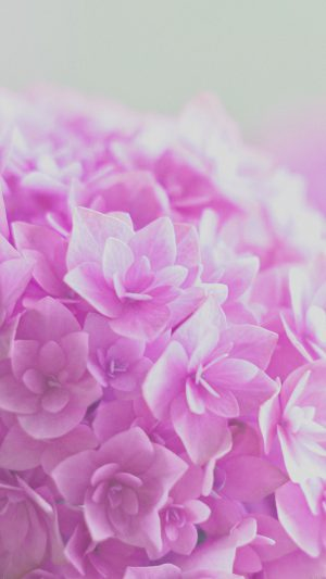 Red Hortensia Flower Beautiful Nature iPhone 8 wallpaper