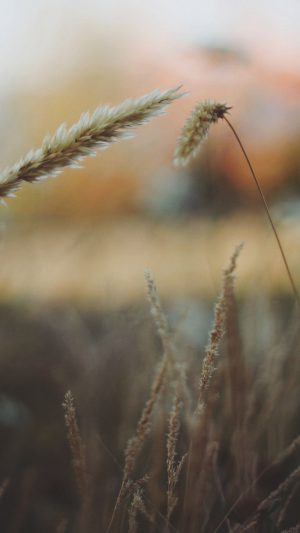 Reed Flower Nature Field iPhone 8 wallpaper